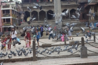 Plenty of pigeons in Durbar Square
