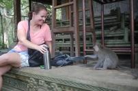 monkey robbery