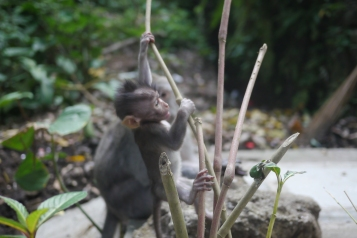 monkeybaby5