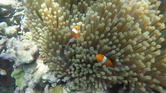 Found Nemo