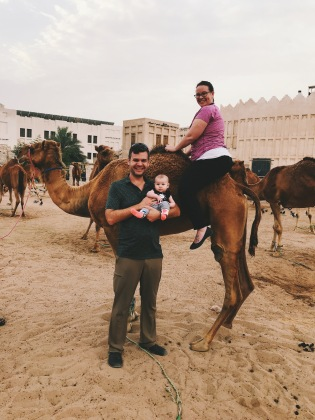 Riding a Qatar Camel